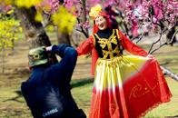 北京之春 花之韶华