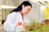廖红:用根系滋养土壤 让植物茁壮成长