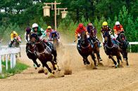 玉龙国际赛马公开赛2018赛季5月19日开锣