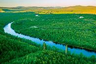 重点国有林区改革取得阶段性重要进展